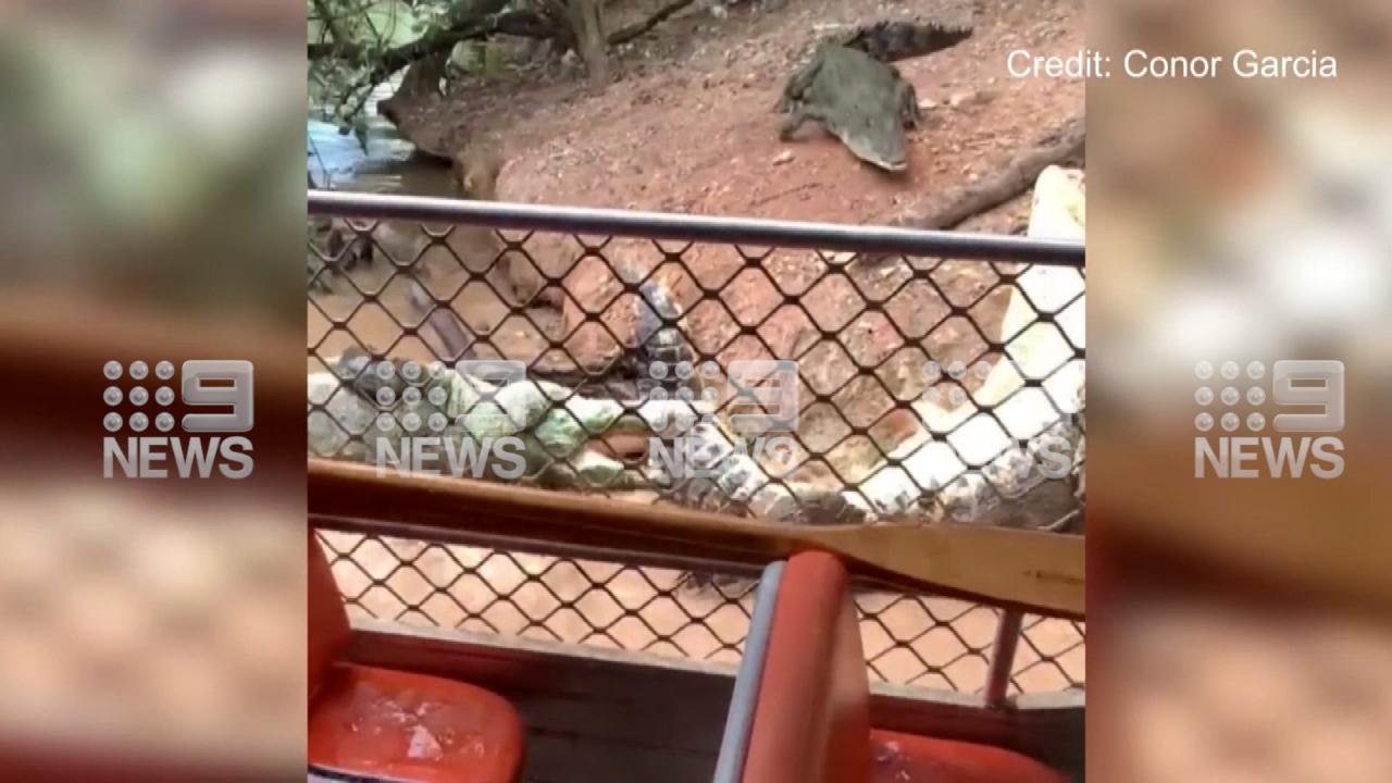 فيديو : معركة ملحمية بين تمساحين في استراليا