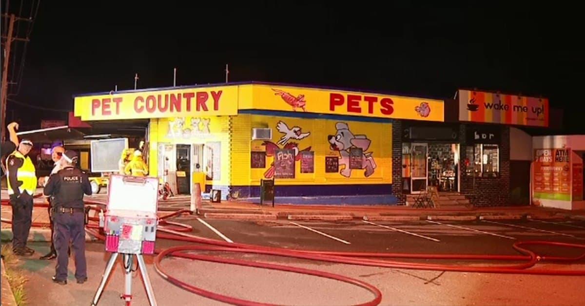 حريق يقتل العديد من الحيوانات الأليفة الموجودة في أحد متاجر بريسبان