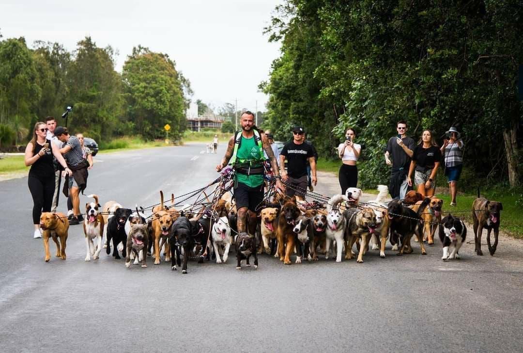 أسترالي يحقق رقماً قياسياً بالسير مع الكلاب!