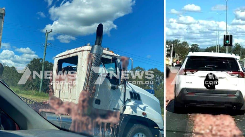 """شاحنة تكسب حمولة من """"أحشاء الحيوانات"""" على إحدى طرقات كوينزلاند"""