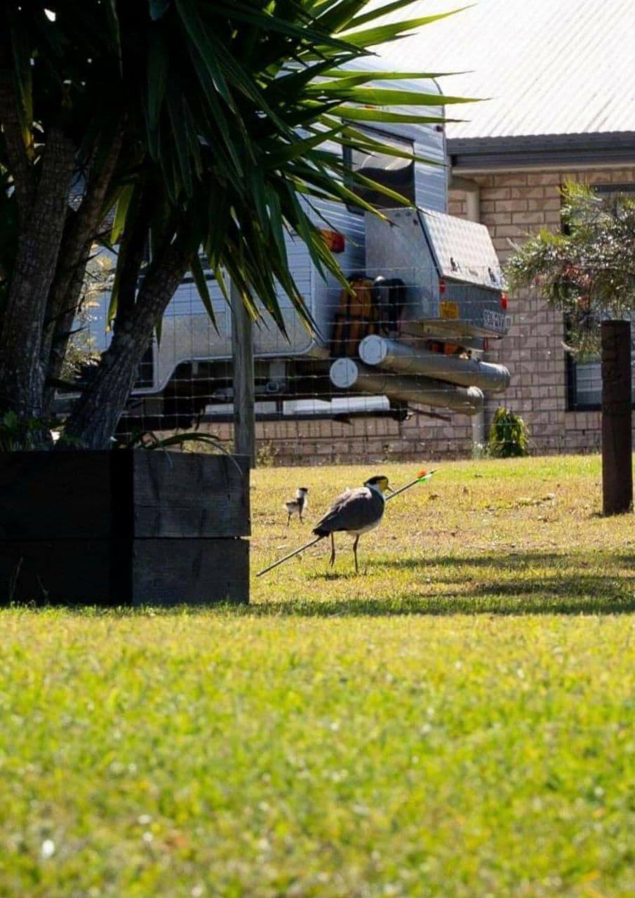 فرض غرامة 1250 دولار على رجل أصاب طائر من منزله أثناء اللعب