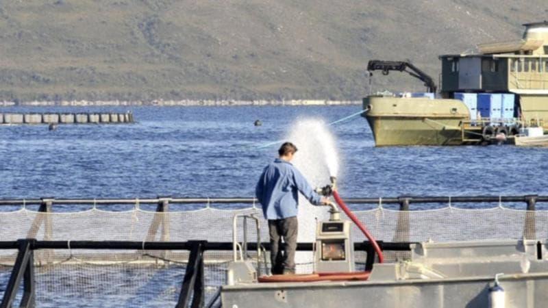نقل 20 شخص إلى المستشفى إثر تسرب غاز من مصنع معالجة سمك السلمون في تسمانيا