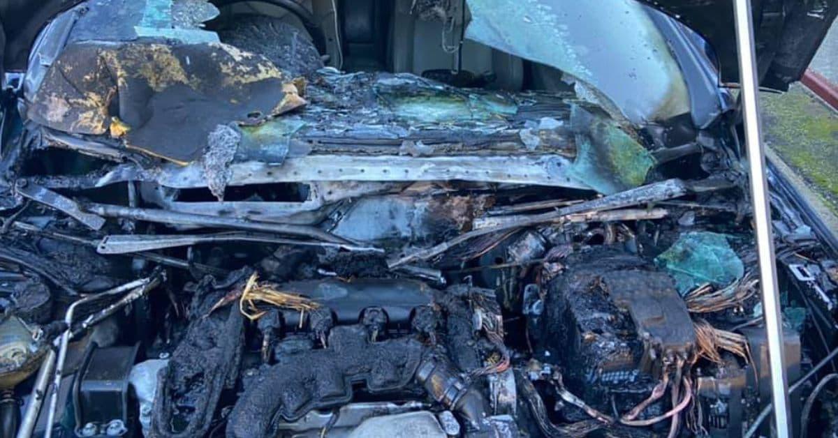 العثور على عش فئران داخل غطاء سيارة بعد احتراقها في نيو ساوث ويلز