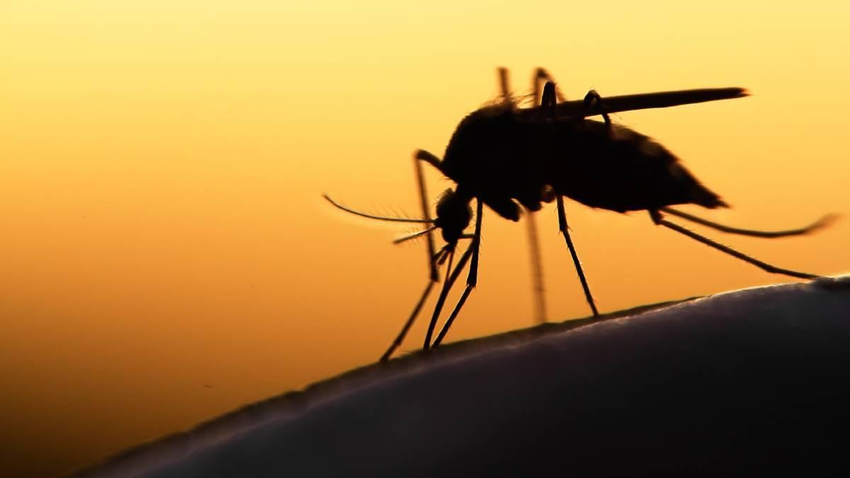 إصابة 677 شخصاً من فيكتوريا بحمى روس التي ينقلها البعوض منذ بداية 2021